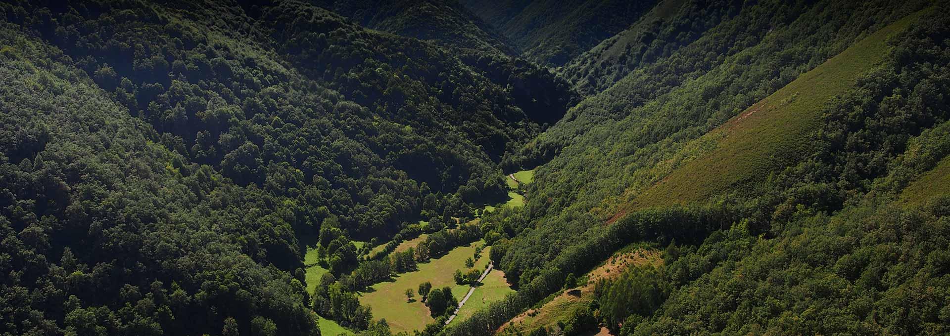 Bosque de Muniellos - Cangas del Narcea